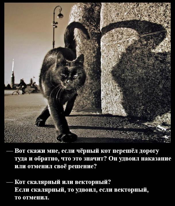 Если черный кот перешёл дорогу туда и обратно?