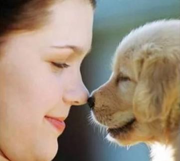 что такое зоотерапия